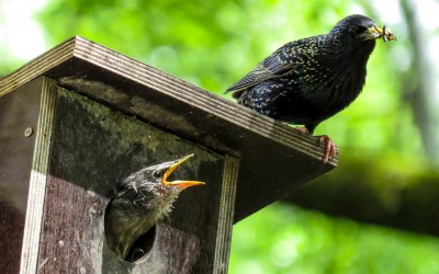 bird-759955_960_720